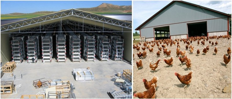 Dorian-Chicken-house-or-hen-house-cage-and-ground-feeding-system